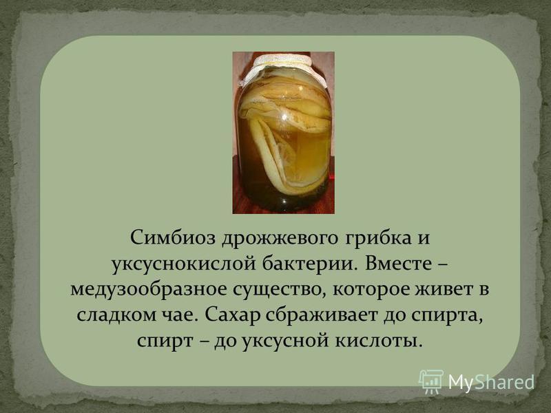 чайный гриб Симбиоз дрожжевого грибка и уксуснокислой бактерии. Вместе – медузообразное существо, которое живет в сладком чае. Сахар сбраживает до спирта, спирт – до уксусной кислоты.