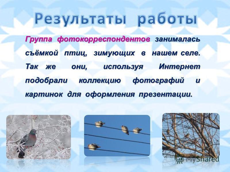 Группа фотокорреспондентов занималась съёмкой птиц, зимующих в нашем селе. Так же они, используя Интернет подобрали коллекцию фотографий и картинок для оформления презентации.