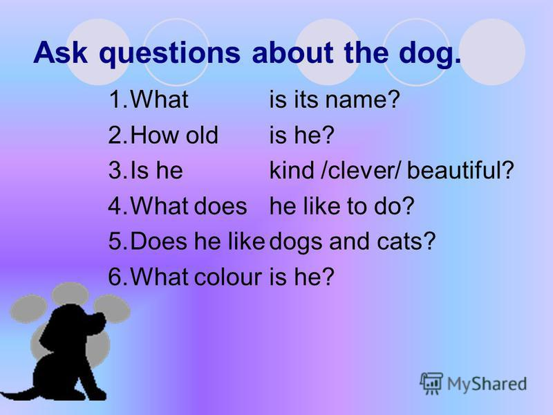 Ask questions about the dog. 1.What 2.How old 3.Is he 4.What does 5.Does he like 6.What colour is its name? is he? kind /clever/ beautiful? he like to do? dogs and cats? is he?