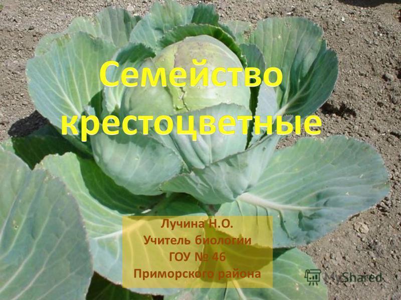Лучина Н.О. Учитель биологии ГОУ 46 Приморского района