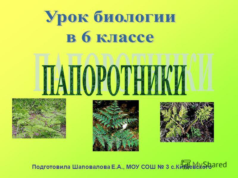 Подготовила Шаповалова Е.А., МОУ СОШ 3 с.Китаевского