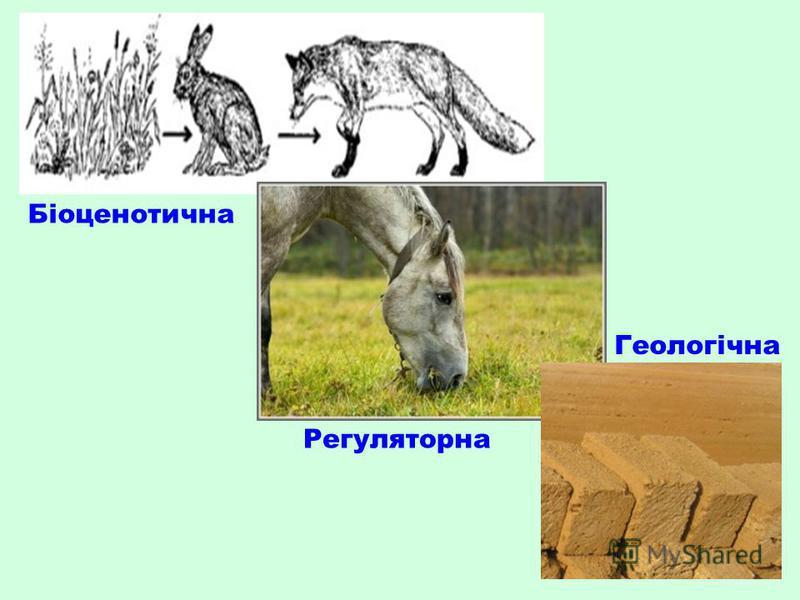 Біоценотична Регуляторна Геологічна