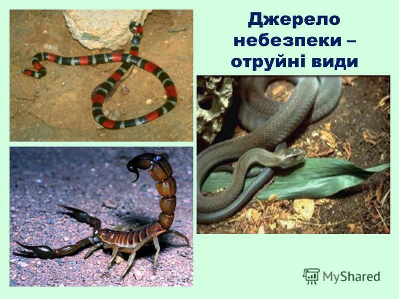 Джерело небезпеки – отруйні види