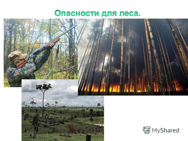 Отстрел животных Пожар Вырубка лесов 12