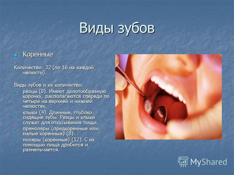 Виды зубов Коренные Коренные Количество: 32 (по 16 на каждой челюсти). Виды зубов и их количество: резцы (8). Имеют долотообразную коронку, располагаются спереди по четыре на верхней и нижней челюстях. резцы (8). Имеют долотообразную коронку, распола