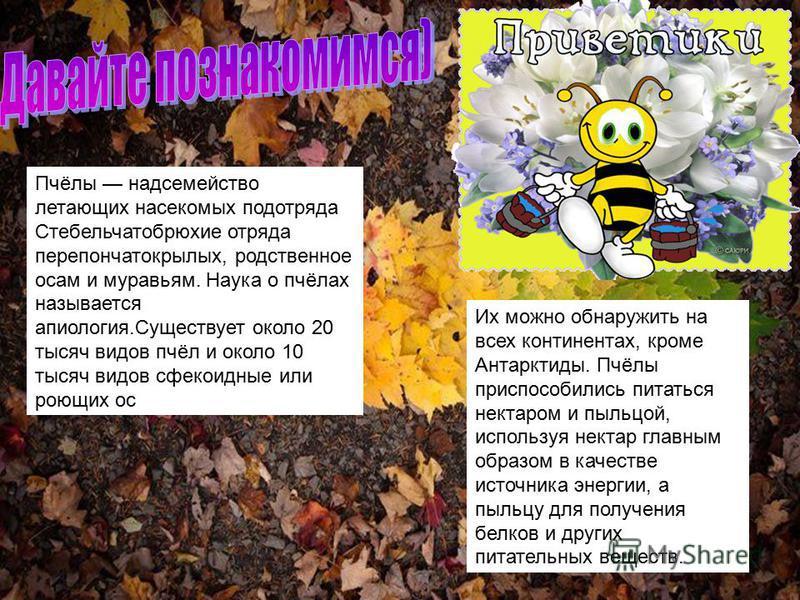 Пчёлы надсемейство летающих насекомых подотряда Стебельчатобрюхие отряда перепончатокрылых, родственное осам и муравьям. Наука о пчёлах называется апология.Существует около 20 тысяч видов пчёл и около 10 тысяч видов сфекоидные или роющих ос Их можно