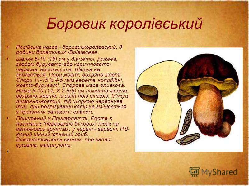 Боровик королівський Російська назва - боровиккоролевский. З родини болетоївих -Boletaceae. Шапка 5-10 (15) см у діаметрі, рожева, згодом бурувато-або коричнювато- червона, волокниста. Шкірка не знімається. Пори жовті, вохряно-жовті. Спори 11-15 X 4-
