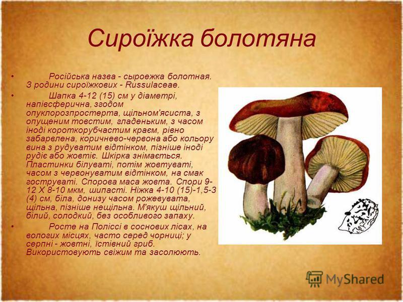 Сироїжка болотяна Російська назва - сыроежка болотная. З родини сироїжкових - Russulaceae. Шапка 4-12 (15) см у діаметрі, напівсферична, згодом опуклорозпростерта, щільном'ясиста, з опущеним товстим, гладеньким, з часом іноді короткорубчастим краєм,
