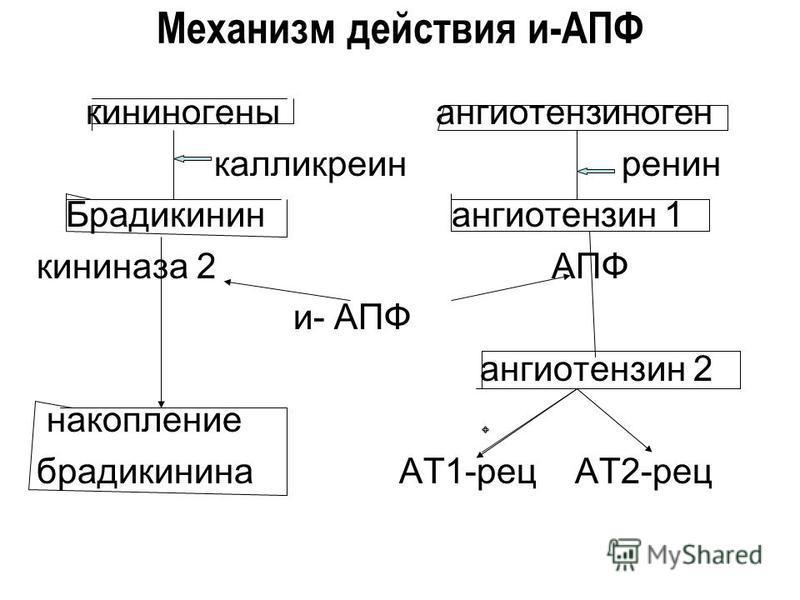 Механизм действия и-АПФ кининогены ангиотензиноген калликреин ренин Брадикинин ангиотензин 1 кининаза 2 АПФ и- АПФ ангиотензин 2 накопление брадикинина АТ1-рец АТ2-рец