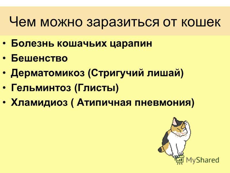 Чем можно заразиться от кошек Болезнь кошачьих царапин Бешенство Дерматомикоз (Стригучий лишай) Гельминтоз (Глисты) Хламидиоз ( Атипичная пневмония)