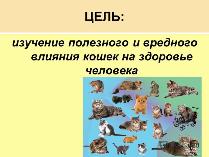 ЦЕЛЬ: изучение полезного и вредного влияния кошек на здоровье человека