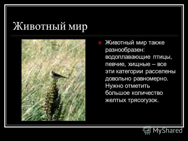 Животный мир Животный мир также разнообразен: водоплавающие птицы, певчие, хищные – все эти категории расселены довольно равномерно. Нужно отметить большое количество желтых трясогузок.