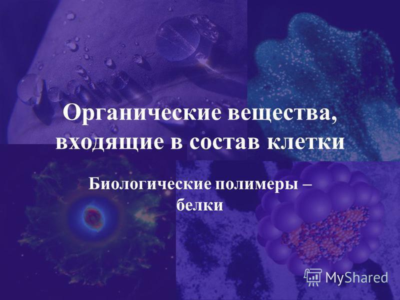 Органические вещества, входящие в состав клетки Биологические полимеры – белки