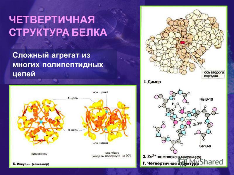 ЧЕТВЕРТИЧНАЯ СТРУКТУРА БЕЛКА Сложный агрегат из многих полипептидных цепей