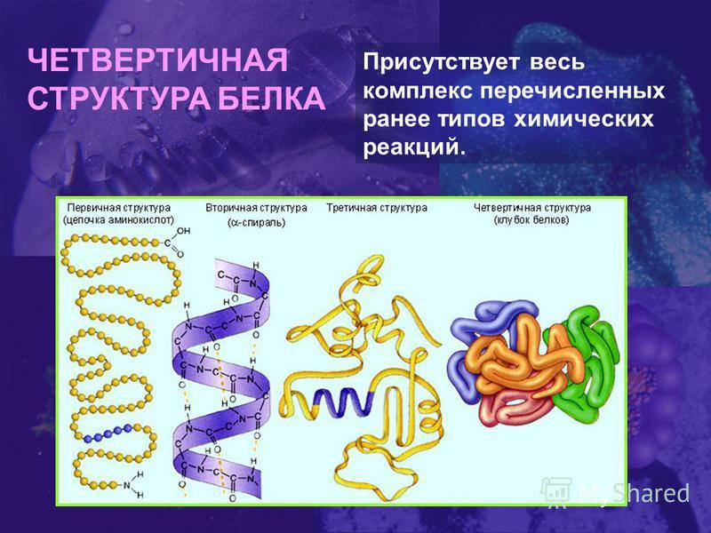 ЧЕТВЕРТИЧНАЯ СТРУКТУРА БЕЛКА Присутствует весь комплекс перечисленных ранее типов химических реакций.