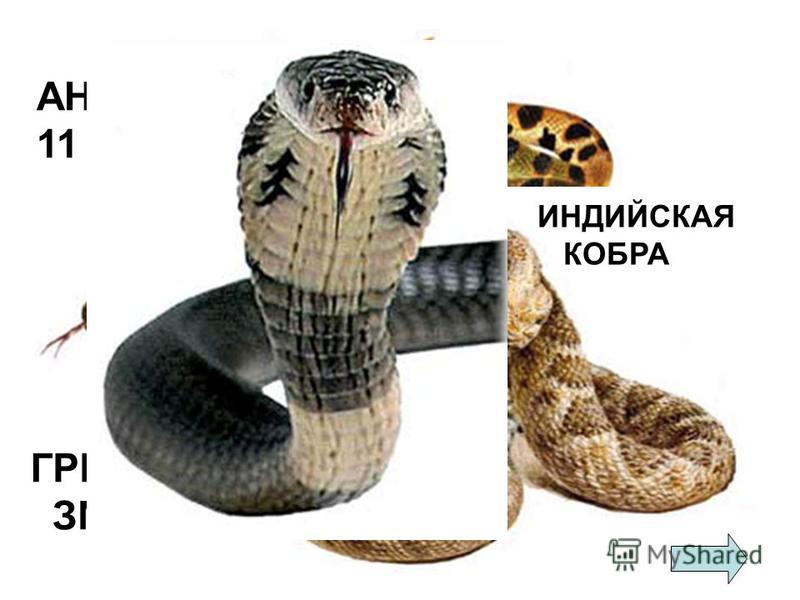 АНАКОНДА 11 м 43 см ГРЕМУЧАЯ ЗМЕЯ ИНДИЙСКАЯ КОБРА