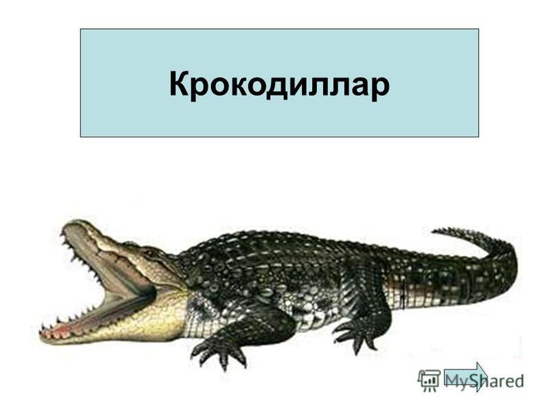 Крокодиллар
