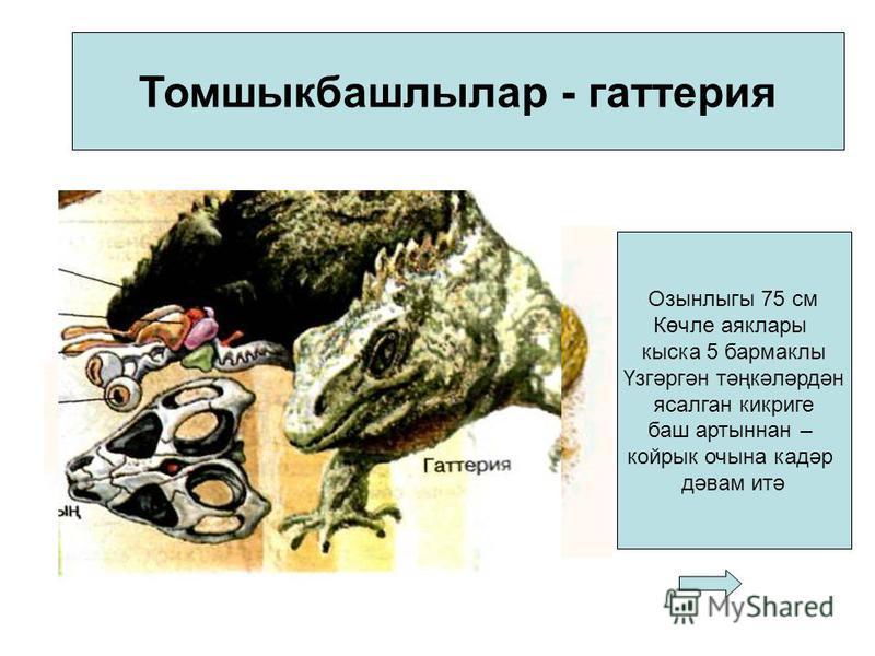 Томшыкбашлылар - гаттерия Озынлыгы 75 см Көчле аяклары киска 5 бармаклы Үзгәргән тәңкәләрдән ясалган кик риге баш артыннан – койры очина кадәр дәвам итә