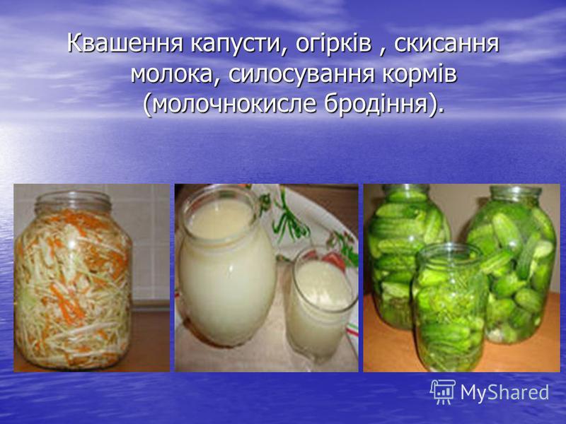 Квашення капусти, огірків, скисання молока, силосування кормів (молочнокисле бродіння).