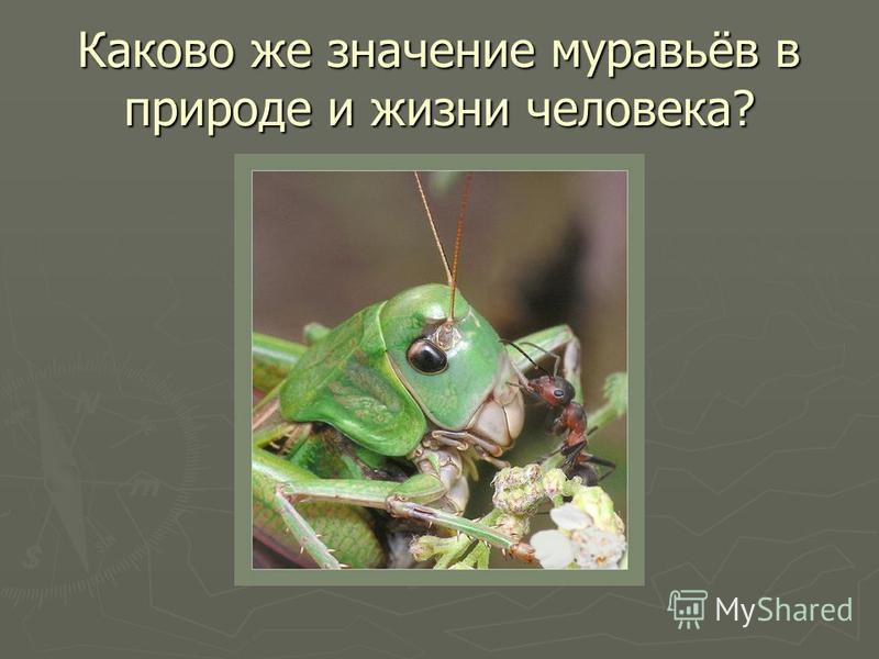 Каково же значение муравьёв в природе и жизни человека?