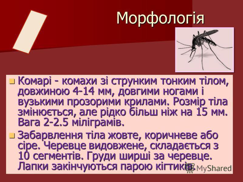 Комарі - комахи зі струнким тонким тілом, довжиною 4-14 мм, довгими ногами і вузькими прозорими крилами. Розмір тіла змінюється, але рідко більш ніж на 15 мм. Вага 2-2.5 міліграмів. Комарі - комахи зі струнким тонким тілом, довжиною 4-14 мм, довгими