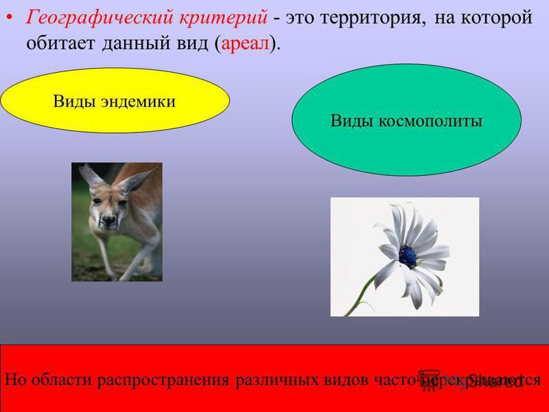 Географический критерий - это территория, на которой обитает данный вид (ареал). Виды эндемики Виды космополиты Но области распространения различных видов часто перекрываются