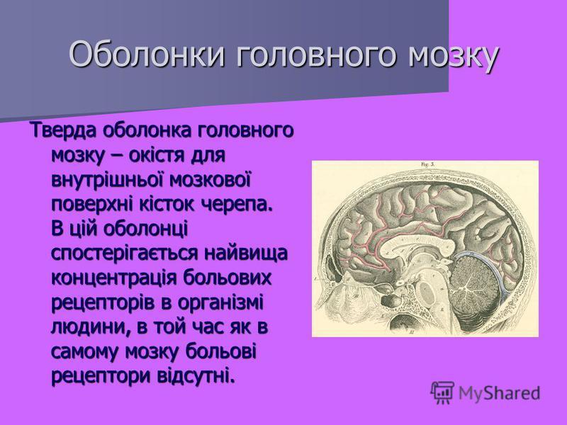 Тверда оболонка головного мозку – окістя для внутрішньої мозкової поверхні кісток черепа. В цій оболонці спостерігається найвища концентрація больових рецепторів в організмі людини, в той час як в самому мозку больові рецептори відсутні. Оболонки гол