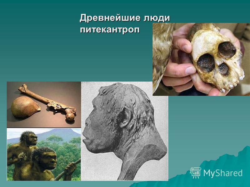 Древнейшие люди питекантроп
