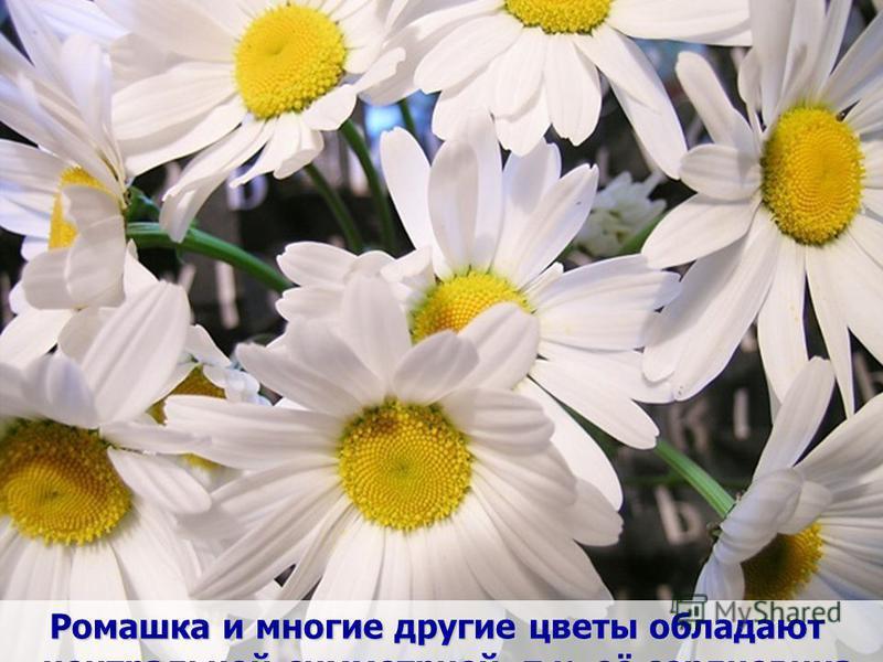 Центральная симметрия характерна для цветов, плодов растений. В разрезе они близки к окружности, а окружность имеет центр симметрии.
