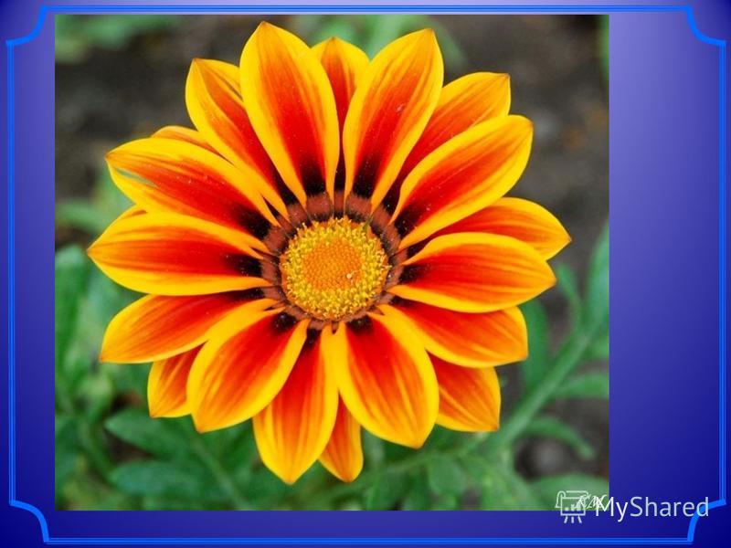 Симметрия в цветах Ромашка и многие другие цветы обладают центральной симметрией, т.к. её сердцевина представляет собой окружность. Ромашка и многие другие цветы обладают центральной симметрией, т.к. её сердцевина представляет собой окружность.