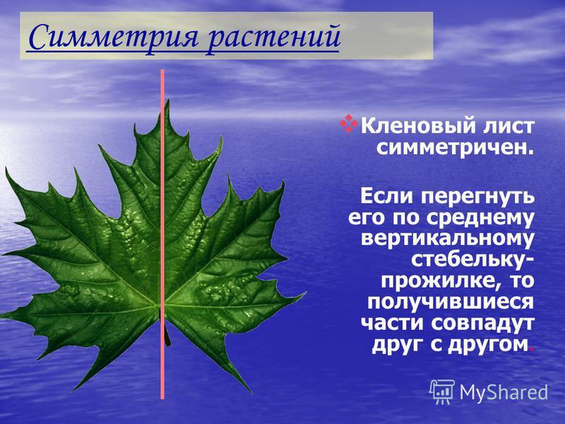 Поворотная симметрия Для многих цветов характерна и поворотная симметрия. Для многих цветов характерна и поворотная симметрия. Повернув цветок шиповника вокруг некоторой прямой Повернув цветок шиповника вокруг некоторой прямой мы увидим, мы увидим, ч