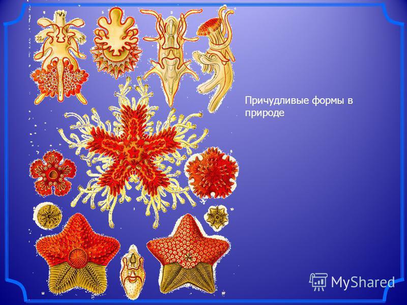 Центральная симметрия характерна и живым организмам