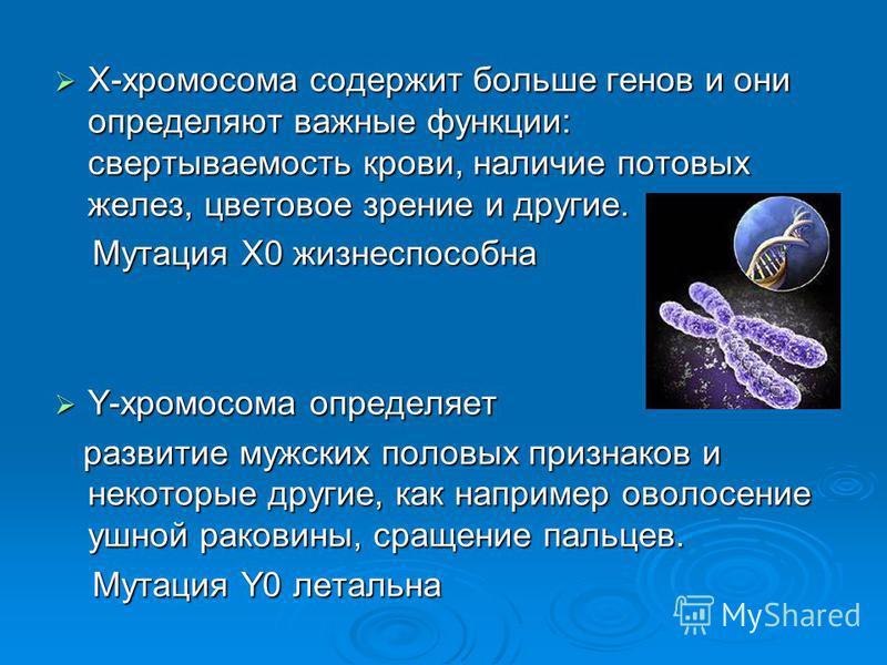 Х-хромосома содержит больше генов и они определяют важные функции: свертываемость крови, наличие потовых желез, цветовое зрение и другие. Х-хромосома содержит больше генов и они определяют важные функции: свертываемость крови, наличие потовых желез,
