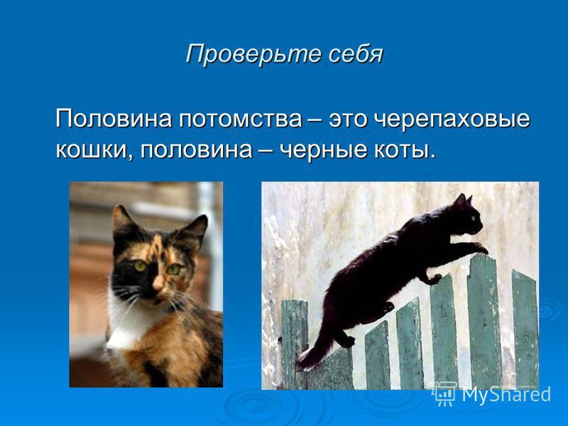Проверьте себя Половина потомства – это черепаховые кошки, половина – черные коты. Половина потомства – это черепаховые кошки, половина – черные коты.