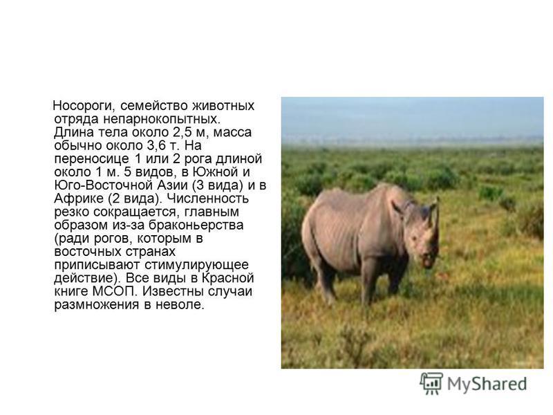 Носороги, семейство животных отряда непарнокопытных. Длина тела около 2,5 м, масса обычно около 3,6 т. На переносице 1 или 2 рога длиной около 1 м. 5 видов, в Южной и Юго-Восточной Азии (3 вида) и в Африке (2 вида). Численность резко сокращается, гла