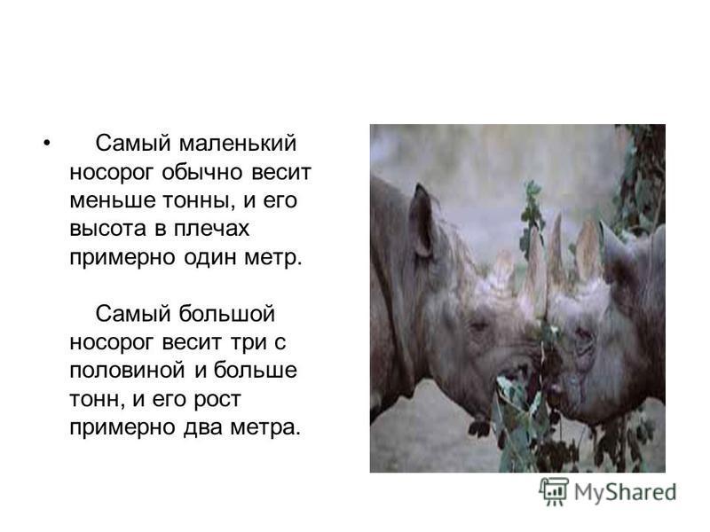 Самый маленький носорог обычно весит меньше тонны, и его высота в плечах примерно один метр. Самый большой носорог весит три с половиной и больше тонн, и его рост примерно два метра.