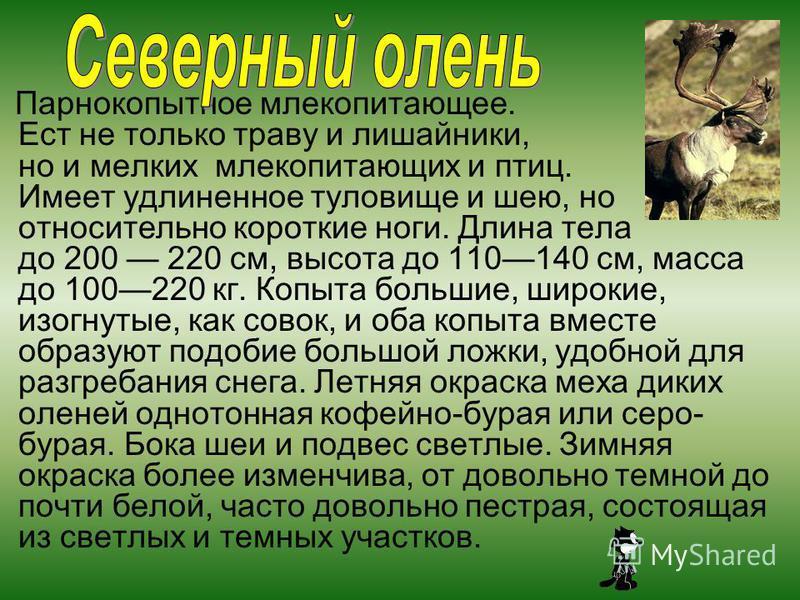 Парнокопытное млекопитающее. Ест не только траву и лишайники, но и мелких млекопитающих и птиц. Имеет удлиненное туловище и шею, но относительно короткие ноги. Длина тела до 200 220 см, высота до 110140 см, масса до 100220 кг. Копыта большие, широкие