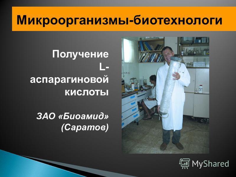 Микроорганизмы-биотехнологи Получение L- аспарагиновой кислоты ЗАО «Биоамид» (Саратов)