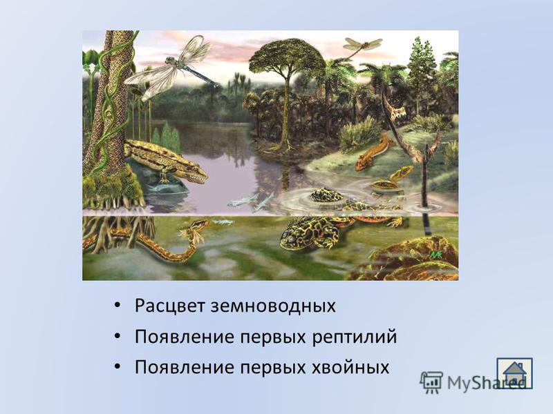 Расцвет земноводных Появление первых рептилий Появление первых хвойных
