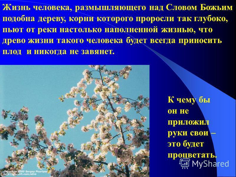 Жизнь человека, размышляющего над Словом Божьим подобна дереву, корни которого проросли так глубоко, пьют от реки настолько наполненной жизнью, что древо жизни такого человека будет всегда приносить плод и никогда не завянет. К чему бы он не приложил