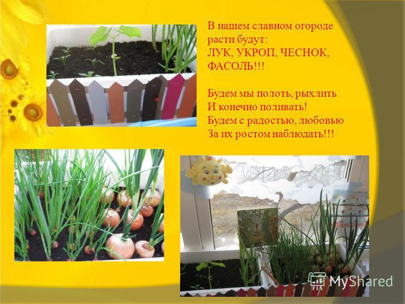 В нашем славном огороде расти будут: ЛУК, УКРОП, ЧЕСНОК, ФАСОЛЬ!!! Будем мы полоть, рыхлить И конечно поливать! Будем с радостью, любовью За их ростом наблюдать!!!
