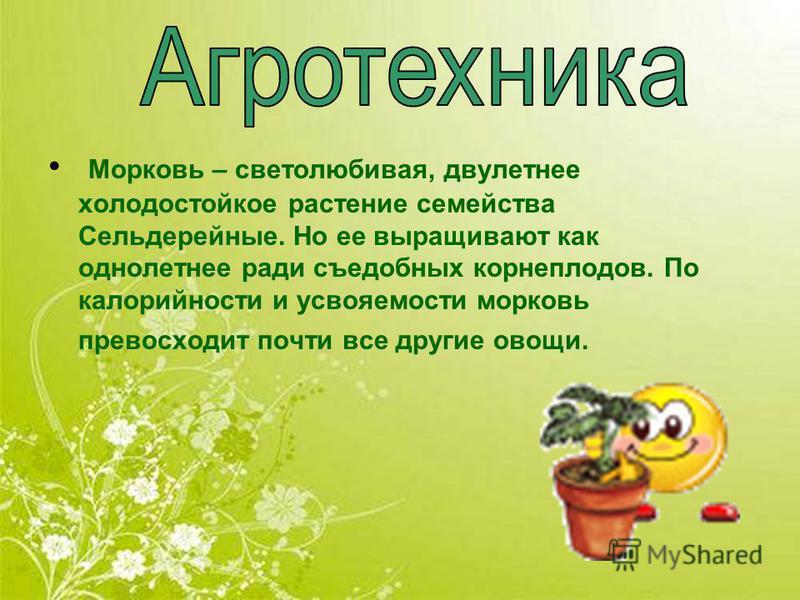 Морковь – светолюбивая, двулетнее холодостойкое растение семейства Сельдерейные. Но ее выращивают как однолетнее ради съедобных корнеплодов. По калорийности и усвояемости морковь превосходит почти все другие овощи.