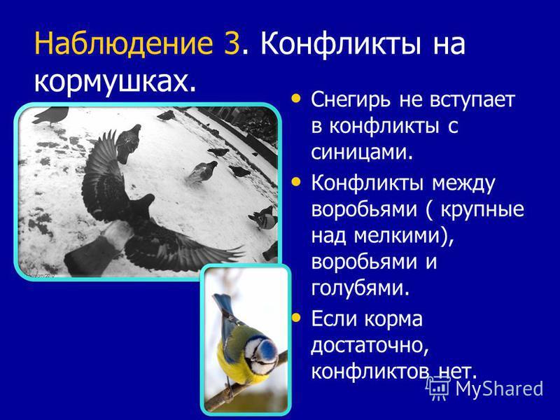 Наблюдение 3. Конфликты на кормушках. Снегирь не вступает в конфликты с синицами. Конфликты между воробьями ( крупные над мелкими), воробьями и голубями. Если корма достаточно, конфликтов нет.