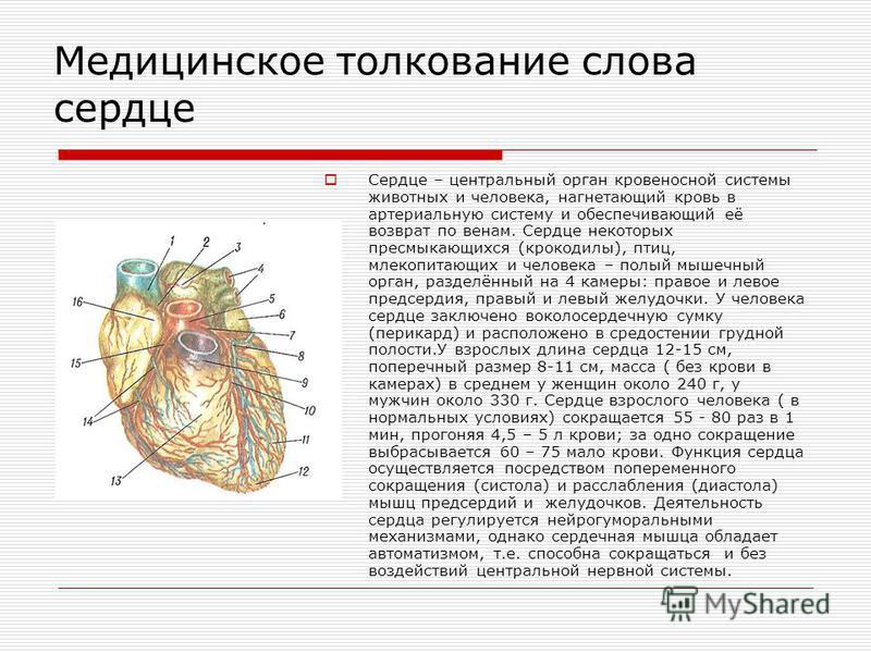 Медицинское толкование слова сердце Сердце – центральный орган кровеносной системы животных и человека, нагнетающий кровь в артериальную систему и обеспечивающий её возврат по венам. Сердце некоторых пресмыкающихся (крокодилы), птиц, млекопитающих и
