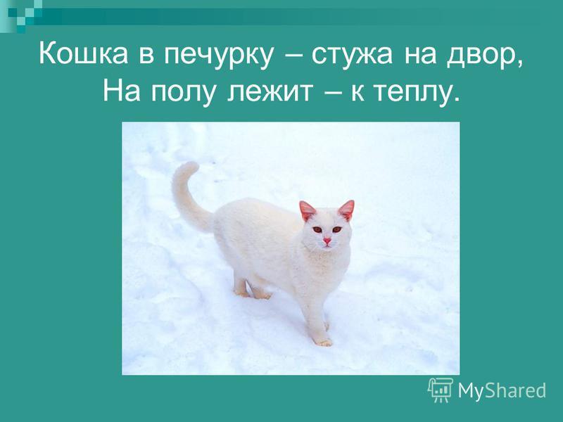 Кошка в печурку – стужа на двор, На полу лежит – к теплу.