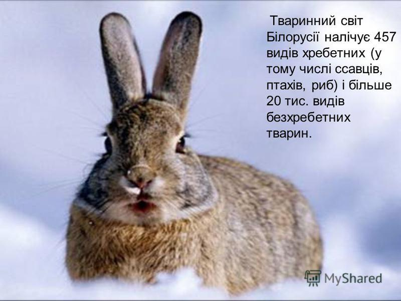 Тваринний світ Білорусії налічує 457 видів хребетних (у тому числі ссавців, птахів, риб) і більше 20 тис. видів безхребетних тварин.