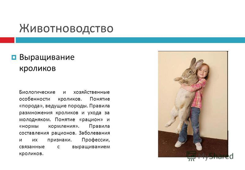 Животноводство Выращивание кроликов Биологические и хозяйственные особенности кроликов. Понятие «порода», ведущие породы. Правила размножения кроликов и ухода за молодняком. Понятие «рацион» и «нормы кормления». Правила составления рационов. Заболева