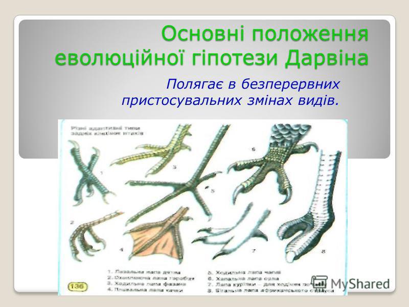 Основні положення еволюційної гіпотези Дарвіна Полягає в безперервних пристосувальних змінах видів.