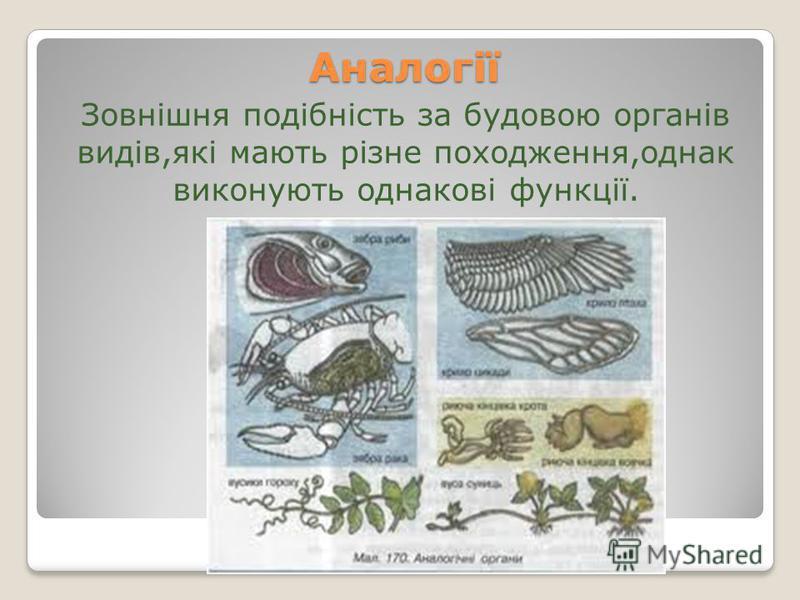 Аналогії Зовнішня подібність за будовою органів видів,які мають різне походження,однак виконують однакові функції.