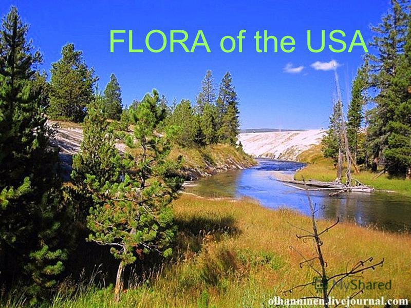 FLORA of the USA